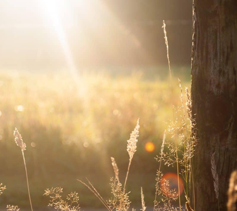 Walking in Obedience: Fear, the enemy of Obedience